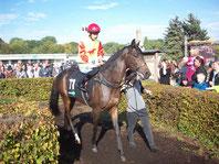 Renn-Pferd im Führ-Ring