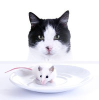 Katzen würden Mäuse kaufen