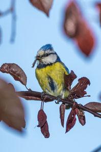 NABU Rhein-Erft Vögel bestimmen