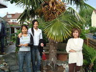 im Schatten der Trachycarpus
