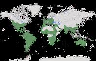 Karte zur Verbreitung der Schleiereule (Tyto alba) weltweit.