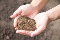 庭木の土の写真