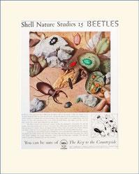 Shell, beetles