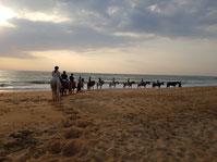 Promenade a cheval plage capbreton
