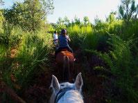 promenade a cheval foret capbreton