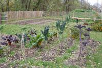 Gemüsegarten im Stiegl Gut Wildshut