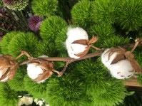 Plantes Kokodémas Composition Noix de coco