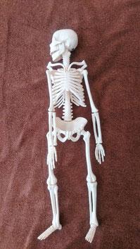 骨模型の写真