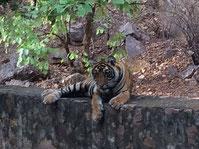 Safari Indien Rundreise 8 Tage