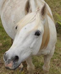 les chevaux du maido, st paul 974 reunion centre équestre