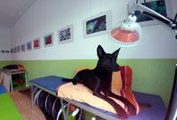 Hund Entspannung Physiotherapie Operationen