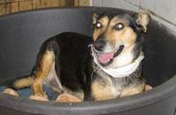 Die kleine Hundeoma Baka eroberte die Herzen ihrer Menschen im Sturm und lebt nun im Süden Deutschlands :-)