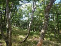 比良岳付近の樹林帯
