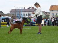 thai_ridgeback,winner,champion,dog,kennelhttp://manidaeng.jimdo.com #thai_ridgeback #тайскийриджбек#тайский_риджбек #питомник #питомниксобак #kennel