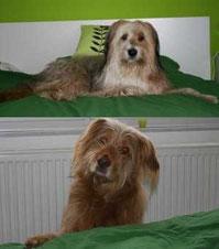 Darf der Hund ins Bett oder nicht?