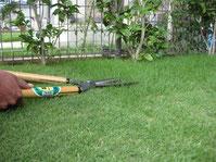 芝生 ガーデニング 画像