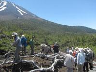 富士山麓にて(15年5月20日)