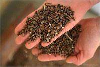 Grano saraceno: proprietà e benefici