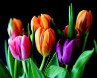 Schöne Augen macht ein Strauß bunter Tulpen