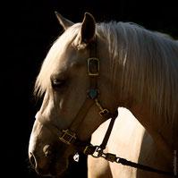 Fotoshooting mit Pferd in Hamburg, Niedersachsen und Schleswig-Holstein