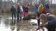 Auf der Jagd nach Wasserskorpionen