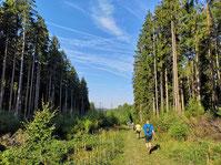 Wandern bad orb spessartbogen walkmän wanderweg