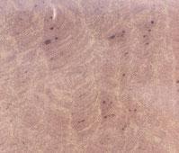 Maulbronner Sandstein rot