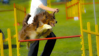 Mentaltraining im Hunde- und Pferdesport – Mental-Top, Frauenfeld