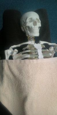 骨模型の馬場さん