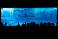 l aquarium kayukan d Osaka guide par un Francais qui parle le japonais