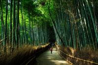 bambouseraie de Arashiyama accompagner par un guide prive francophone au japon