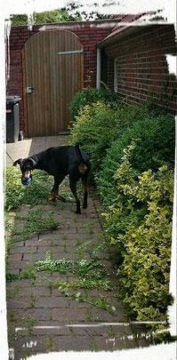 Emma bei der Gartenarbeit ...