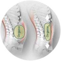 Bauchumfangs-Verminderung durch Straffung der Muskulatur.