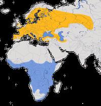 Karte zur Verbreitung des Wespenbussards (Pernis apivorus)