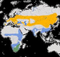 Karte zur Verbreitung des Schwarzstorchs (Ciconia nigra)