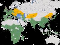 Karte zur Verbreitung des Zwergtauchers (Tachybaptus ruficollis)