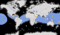 Karte zur Verbreitung des Weißbauchtölpels (Sula leucogaster)