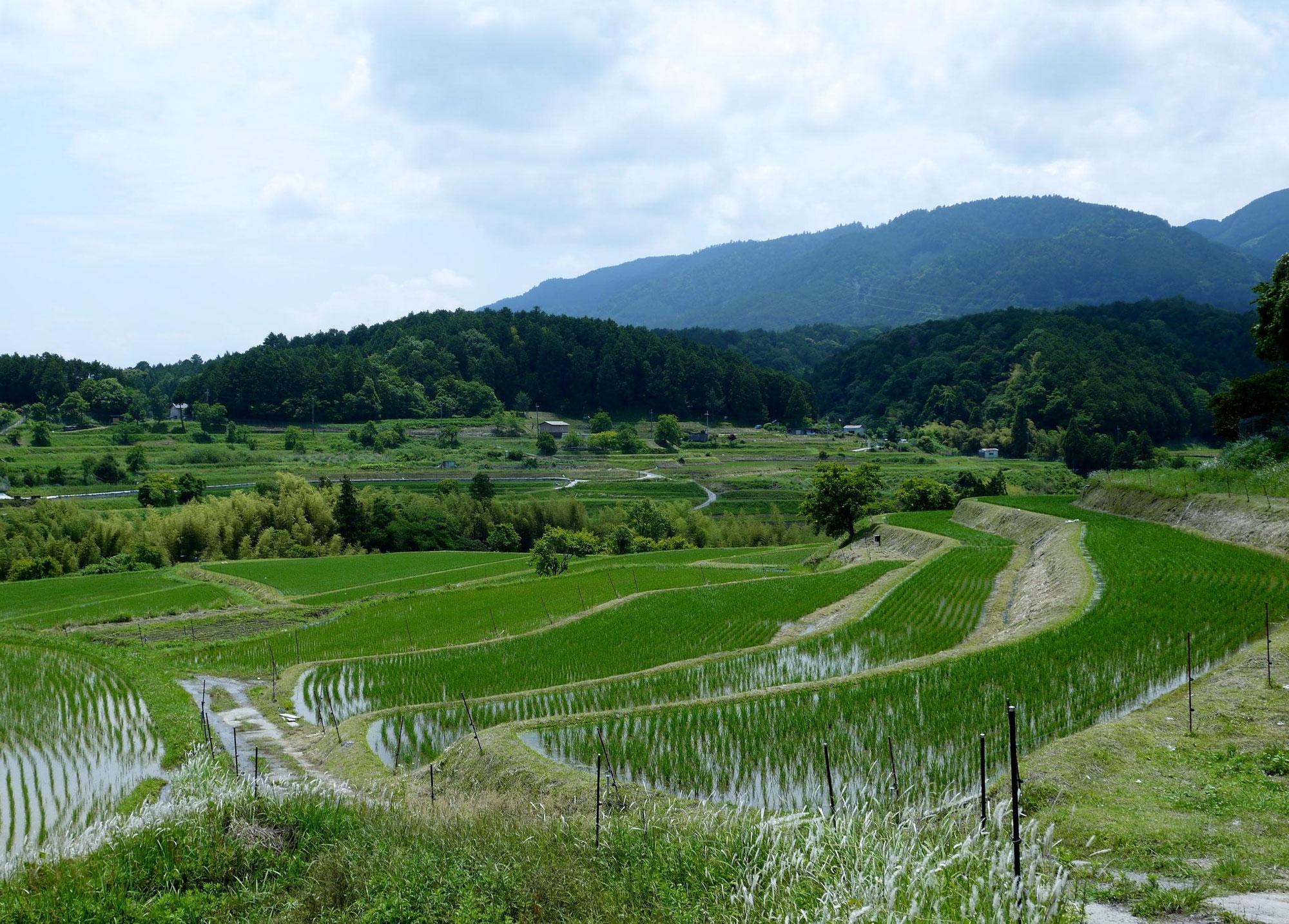 日本の原風景の里山を訪れる
