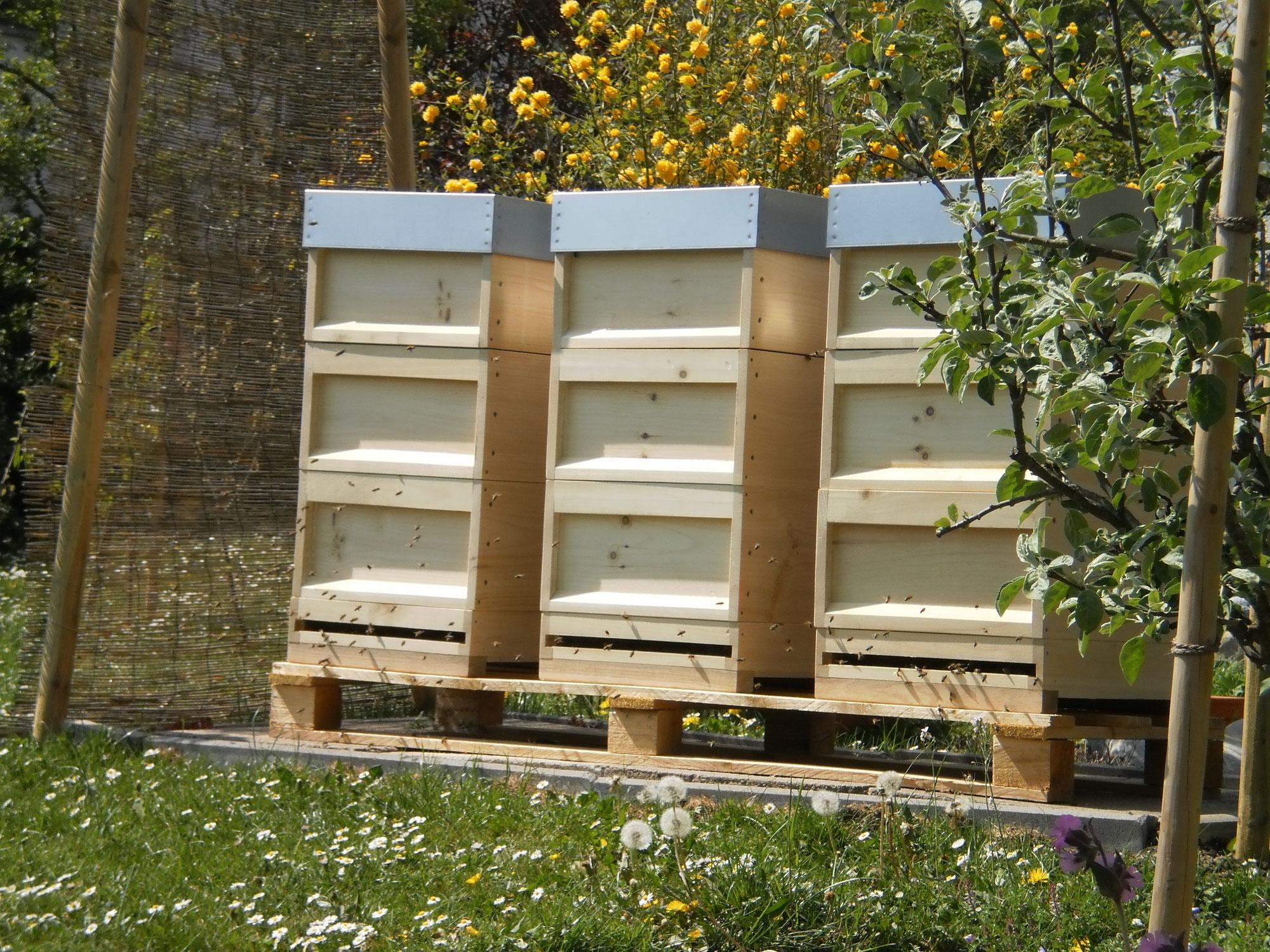 Die Bienenwohnung - heuberg-projekts Webseite!