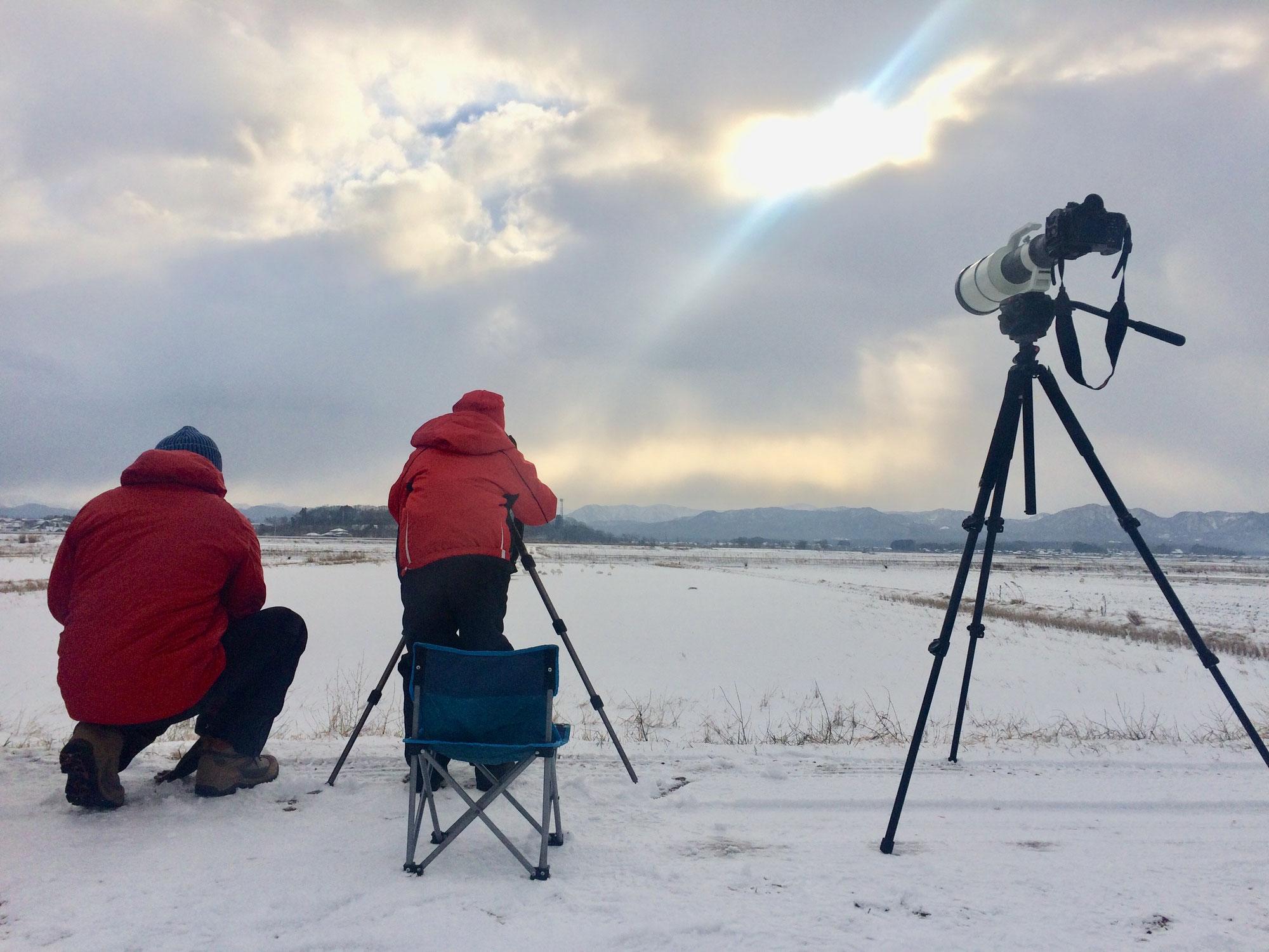 柴山での白鳥撮影会