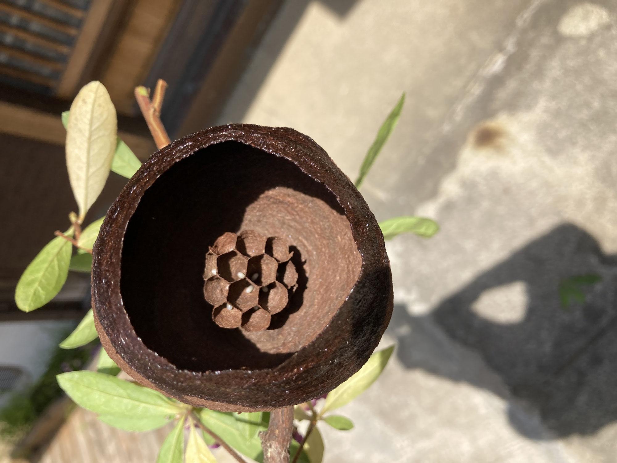 川崎市中原区の個人邸の庭木の剪定。