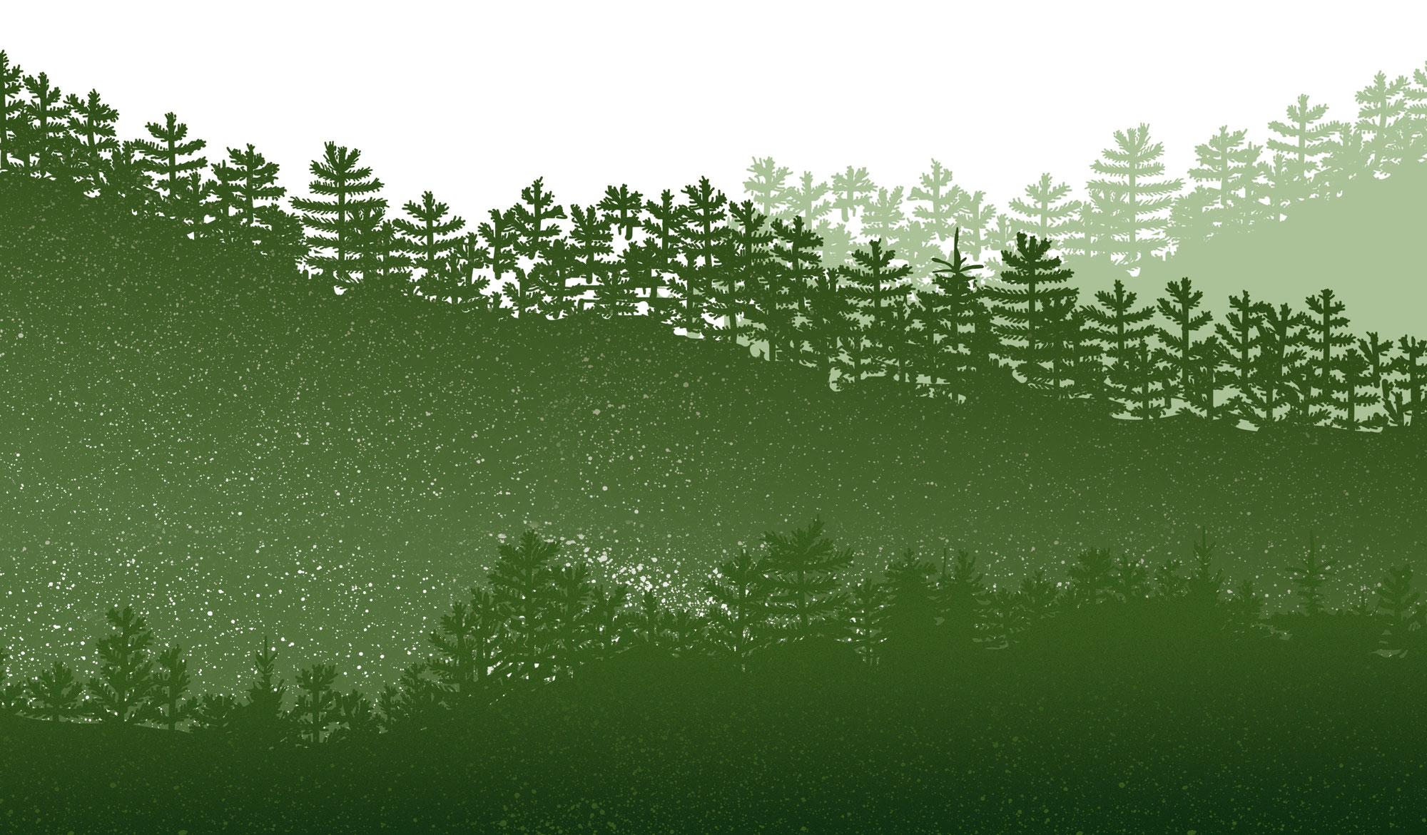 weihnachtsbaum christbaum verkauf nordmann rottanne. Black Bedroom Furniture Sets. Home Design Ideas