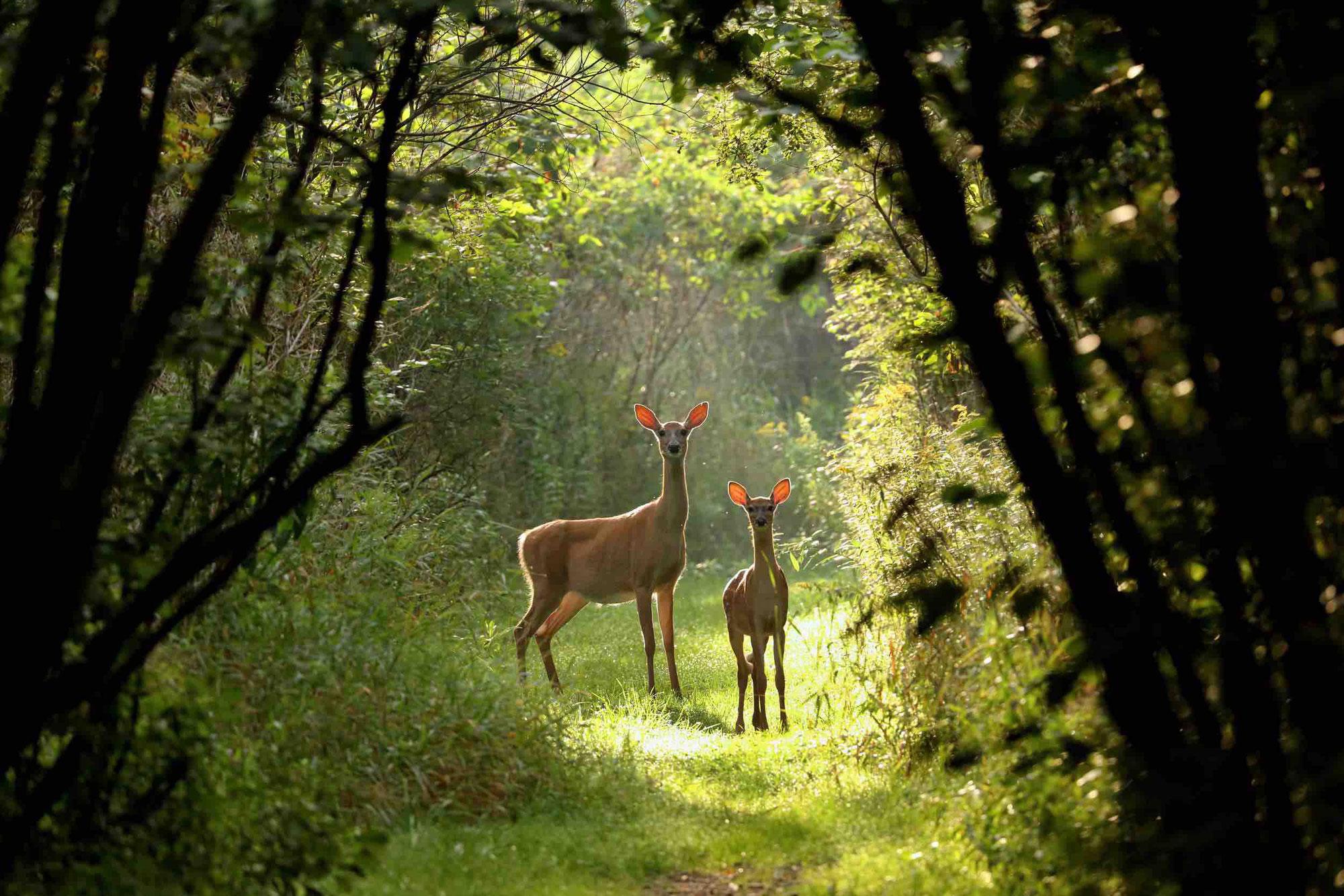 Einladung zur Waldbegehung am 12.06.2021