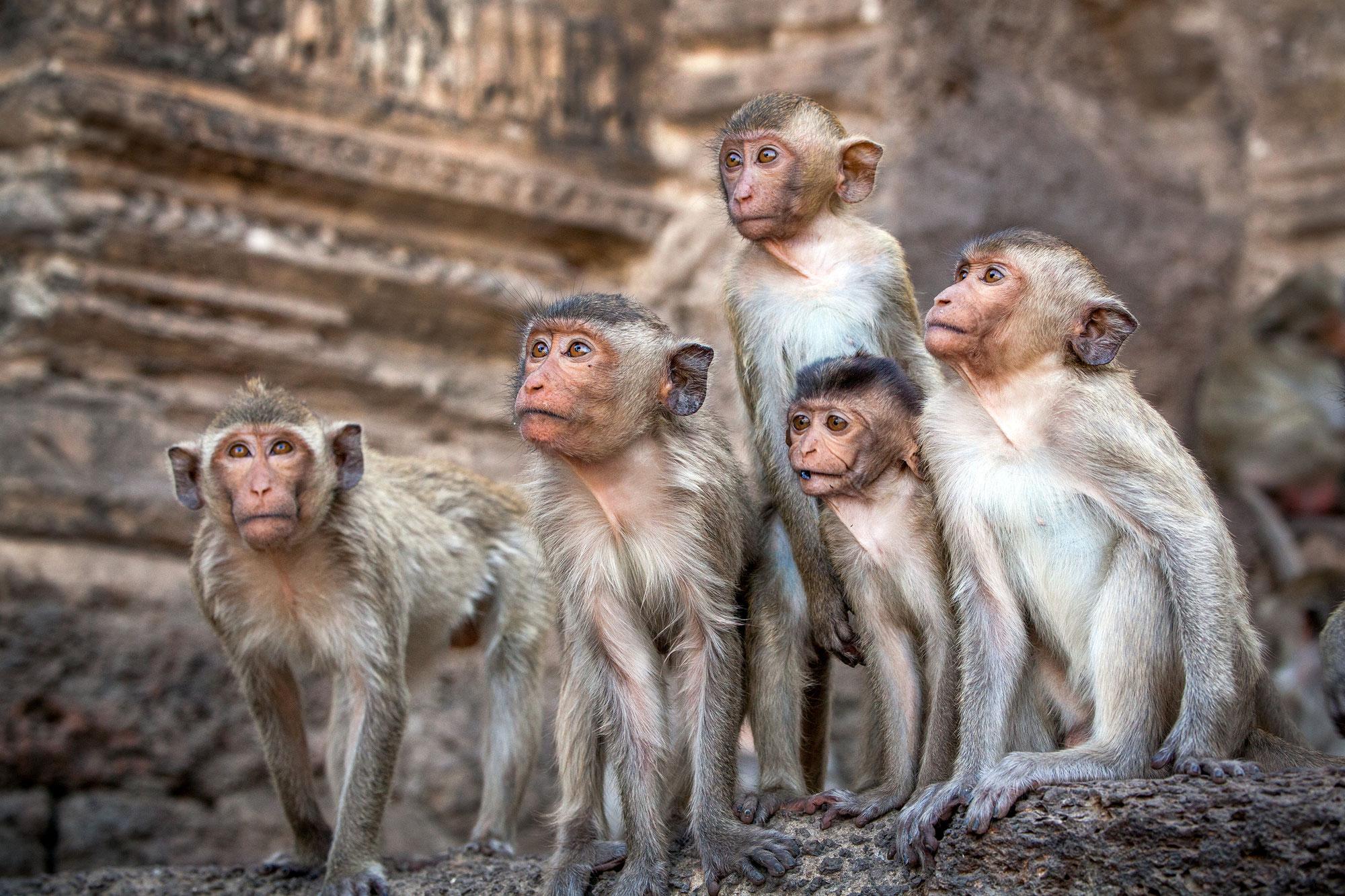 Die wilden Affen...