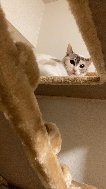 品川区 猫の石松ちゃん、プッチョちゃんのシッター