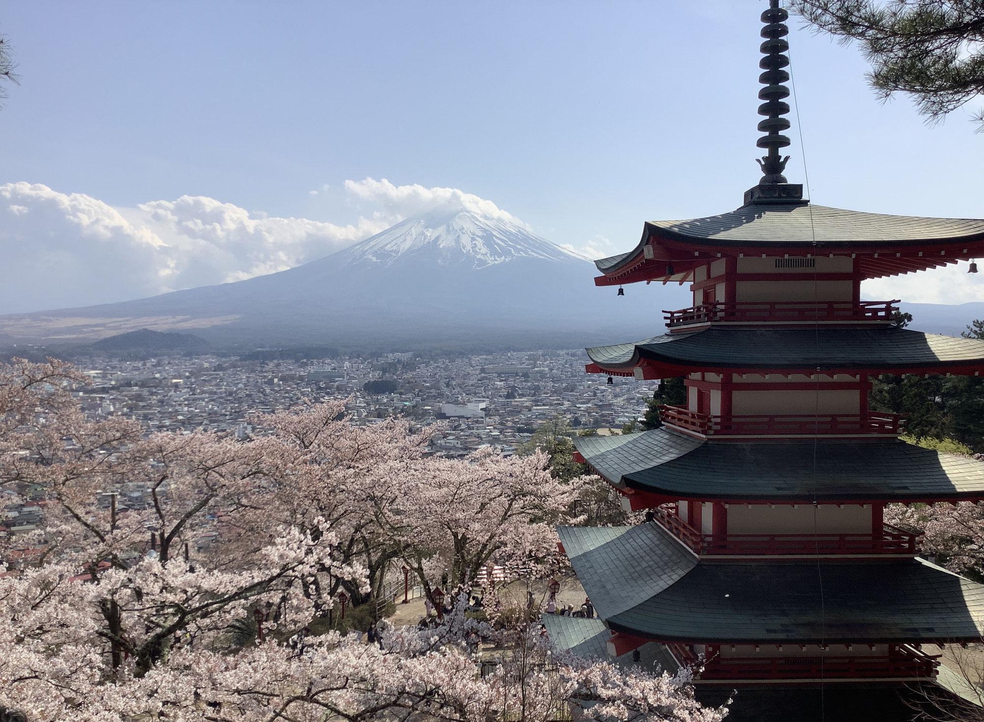 富士山と桜・新倉公園忠霊塔