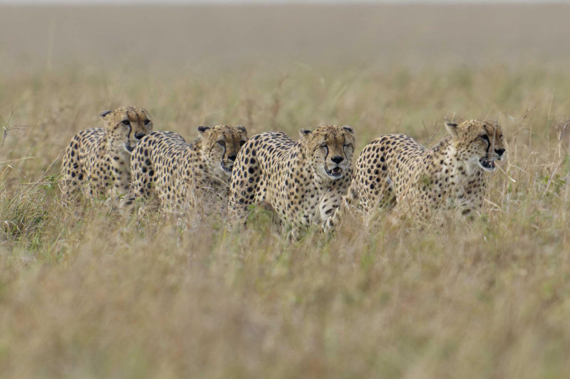 Maasai Mara Sommer 2021 - Die Five – jetzt Four – boys