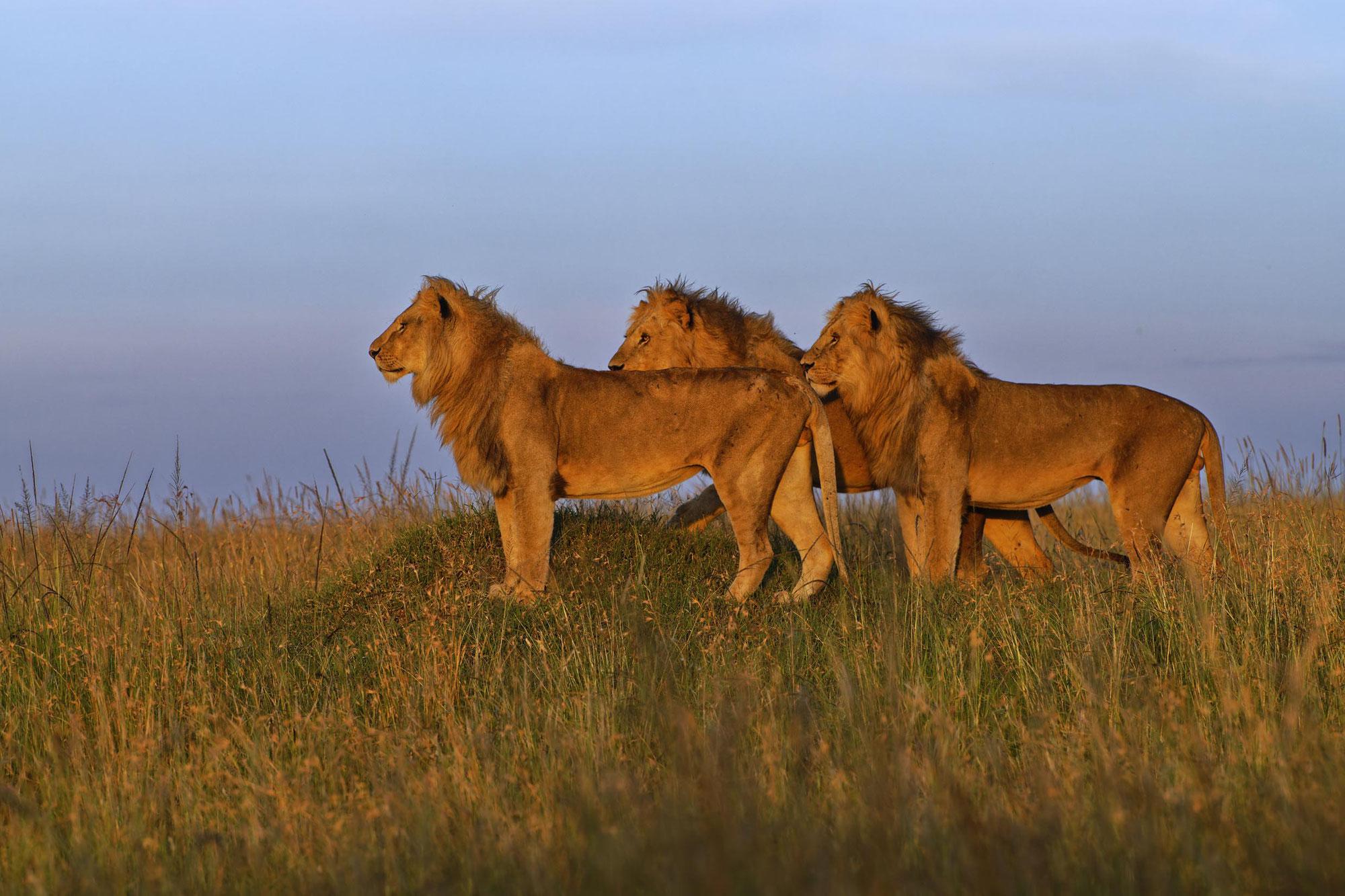 Maasai Mara Upgrade Frühjahr 2021