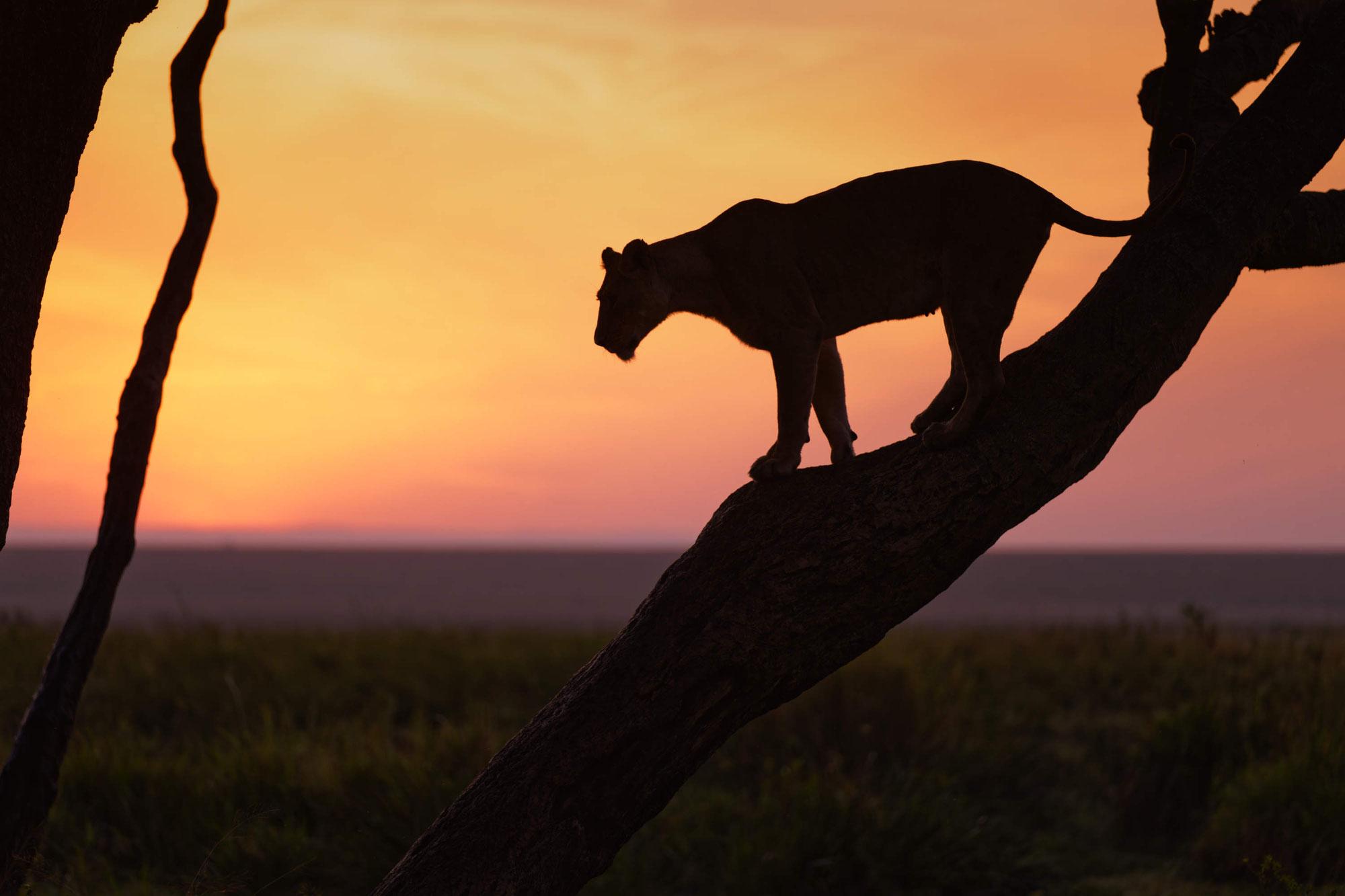 Maasai Mara Sommer 2021