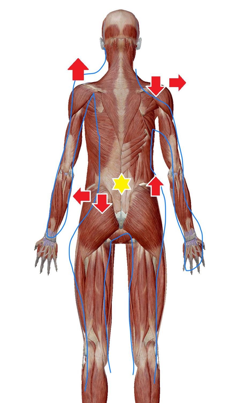 機能性側弯への施術(筋膜リリース・肩甲骨はがし)